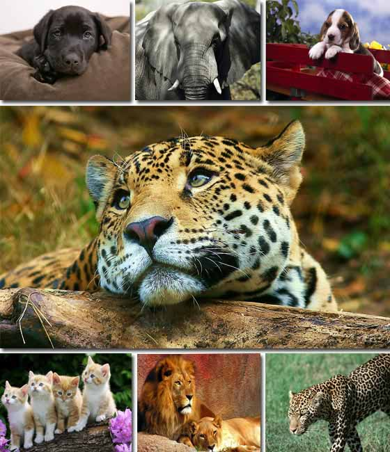 Best Animals Wallpapers